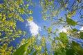 Sky framed by flowering oilseed rape Royalty Free Stock Photo