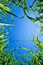 Sky through the grass Royalty Free Stock Photo
