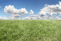 Sky and grass background of cloudy green Royalty Free Stock Photos