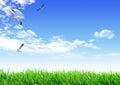 Sky grass bird Royalty Free Stock Photo