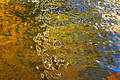 Sky and leaves reflected in the water surface Royalty Free Stock Photo