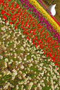 Slanted angle of different tulip colours in keukenhof rows with white structure garden europe Stock Photos