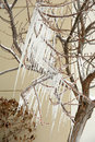 Slanted icicles on tree branches after storm Royalty Free Stock Images