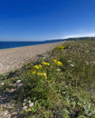 Slapton sands Royalty Free Stock Photo