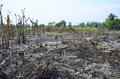 Slash and burn cultivation Stock Images
