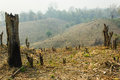Slash and burn cultivation rainforest cut burned to plant crops thailand Royalty Free Stock Photos