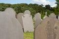 Slate gravestones. Stock Image