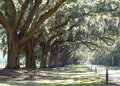 Slavery plantation with dirt road driveway live oak trees and spanish moss in the deep south Stock Images