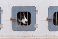Sled dog confined in dog box prior to race Royalty Free Stock Photos