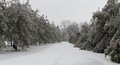 Sledder s row of trees covered in snow and ice on a windy chilly tennessee morning edged blurred Royalty Free Stock Photos