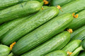Sleek cucumbers Stock Images