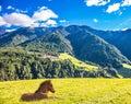 Sleek horse resting