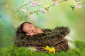 Sleeping african spring baby in a springtime or easter nest Royalty Free Stock Photo