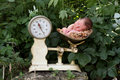 Sleeping baby outside in scale Stock Image