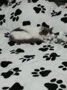 stock image of  Sleeping cat