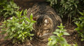 A sleeping cat in the bushes, Lisbon, Portugal. Royalty Free Stock Photo