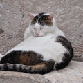 Sleeping cat a fat white black outdoor during the day Stock Images