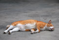 Sleeping cat a laying flat on the ground Stock Photo