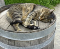 Sleeping cat on an old wooden barrel Stock Photo