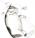 Sleeping cat pencil sketch Stock Photos