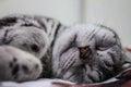 Sleeping Cat.
