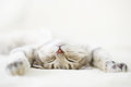 Sleeping cat Royalty Free Stock Photo