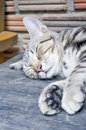 Sleeping cat on the table Stock Images
