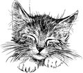 Sleeping cat vector image of a head of a little Royalty Free Stock Images