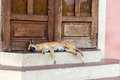 Sleeping Dog On Doorstep In Gr...
