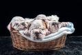 Sleeping English bulldog puppies Royalty Free Stock Photo