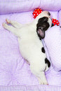 Sleeping french bulldog puppy in bed Stock Image