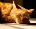 Sleeping ginger cat male snoozing in a sunbeam Royalty Free Stock Photography