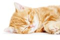 Sleeping kitten cat Royalty Free Stock Photo