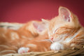 Sleeping kittens adorable ginger asleep in a basket with space for text Royalty Free Stock Photos