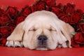 Spacie šteňa