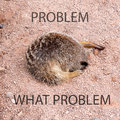 Sleeping meerkat with its head in a hole with text on the image Royalty Free Stock Photography