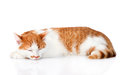 Sleeping orange cat. isolated on white background Royalty Free Stock Photo