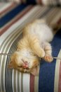 Sleeping orange tabby kitten on chair Royalty Free Stock Image