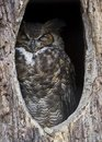 Sleeping Owl Stock Photography
