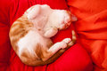 Sleeping red cat a on an orange pillow Royalty Free Stock Images