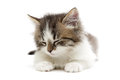 Sleeping small fluffy kitten isolated on white background close up horizontal photo Royalty Free Stock Images