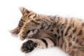 Sleeping tabby kitten paw nose closed Royalty Free Stock Photo