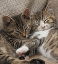 Sleeping tabby kittens Royalty Free Stock Images