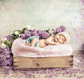 Sleeping toddler lying on flowers and blanket purple Royalty Free Stock Photography