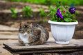 Sleepy brown cat relaxing near petunia Royalty Free Stock Photo