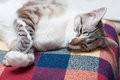 Sleepy cat sweet laying to sleep Stock Photography