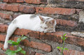 Sleepy cat on the temple wall Royalty Free Stock Photo