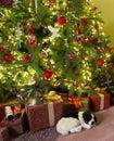 Sleepy dog with christmas lying under the decorated tree Royalty Free Stock Image