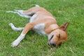 Sleepy dog on the grass Stock Photos