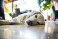 Sleepy dog on the ground Royalty Free Stock Photos